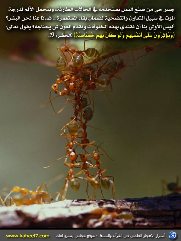 الاعجاز ant-co-operation.JPG